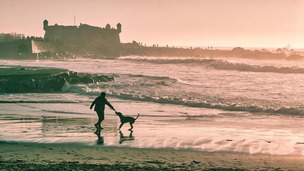 chiens_vacances